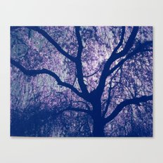 Cherry Blossom Blue Canvas Print