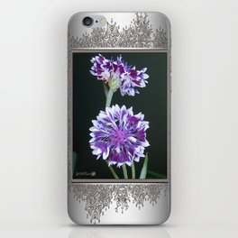 Bachelor Button from the Frosted Queen Mix iPhone Skin
