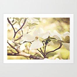 Dogwood in bloom Art Print