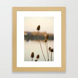 Sunny reeds Framed Art Print
