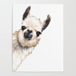 Sneaky Llama White Poster