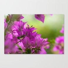 Beautiful  Brazilian flower 218  Canvas Print