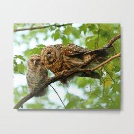 Barred owl mom and baby Metal Print