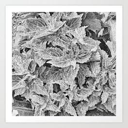 coleus black and white Art Print