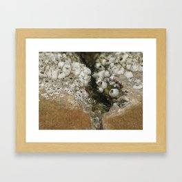 barnicle growth Framed Art Print