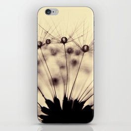 dandelion - droplets of mocha iPhone Skin