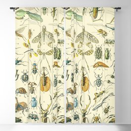 Bugs and Insect Vintage Illustration Drawing by Adolphe Millot of Giant Beatle Dragon Flies Leaf Bug Blackout Curtain