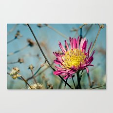 Radiance Canvas Print
