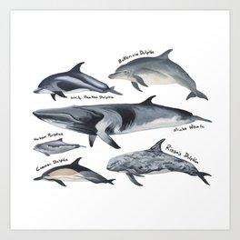 Cetaceans of British Waters Art Print