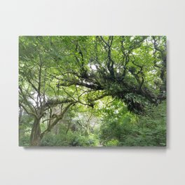 Even Trees Hold Hands Metal Print