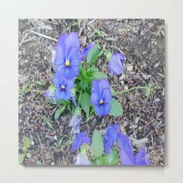 blue Pansy Metal Print