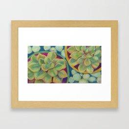 Summer Succulents Framed Art Print