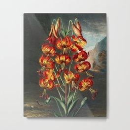 Robert John Thornton - The Superb Lily Metal Print