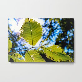 End of Summer Leaves Metal Print
