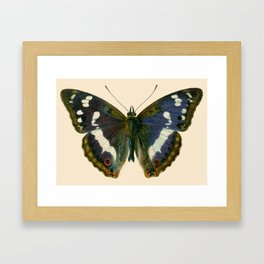 Big Butterfly Framed Art Print