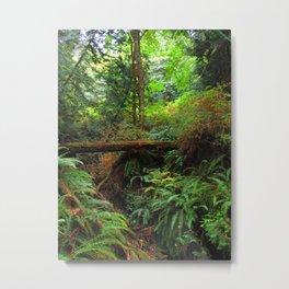 Fern Forest Metal Print
