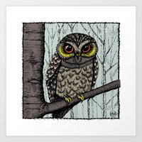 Owl - Colour Art Print