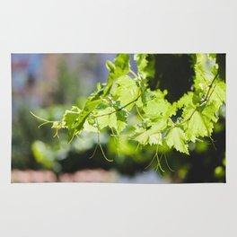 Bulgarian Grapevine #society6 #decor #buyart #kirovair Rug