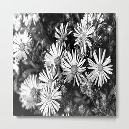 Aster Field Metal Print