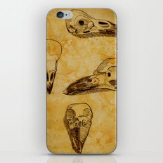 Magpie Bird Skull Drawing iPhone & iPod Skin