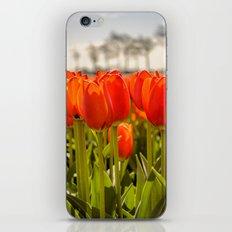 Tulips standing tall iPhone & iPod Skin