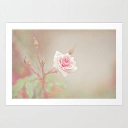 Little Pink Rose Art Print