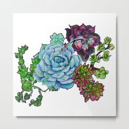Sweet Succulents Metal Print