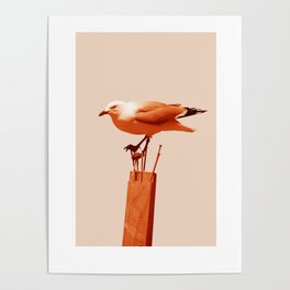 Monochrome Seagull Poster