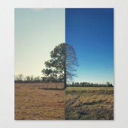 Split Trees Canvas Print