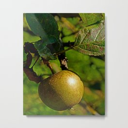 hanging apple Metal Print