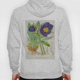 Meconopsis Simplicifolia Vintage Botanical Floral Flower Plant Scientific Hoody