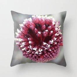 Macro of Round-Headed Leek Flower Allium Sphaerocephalon Throw Pillow