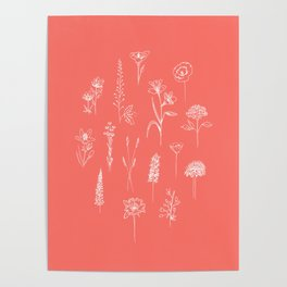 Patagonian wildflowers Coral Poster