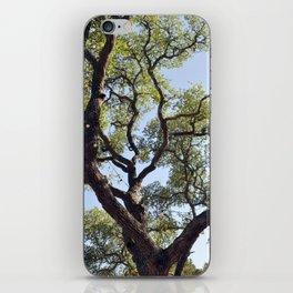 Live Oaks iPhone Skin
