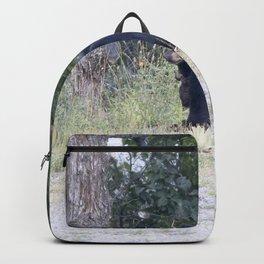 Watercolor Black Bear 18, Drake, Colorado Backpack