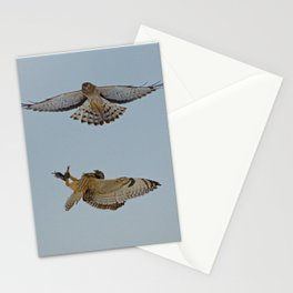 Short Eared Owl and Northern Harrier Stationery Cards