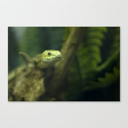In your face! Canvas Print