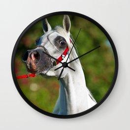 Arabian Horse 1 Wall Clock