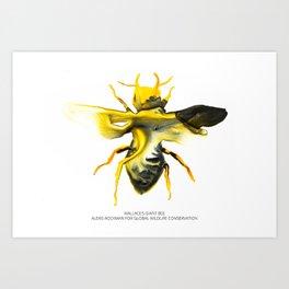 Wallace's Giant Bee Art Print