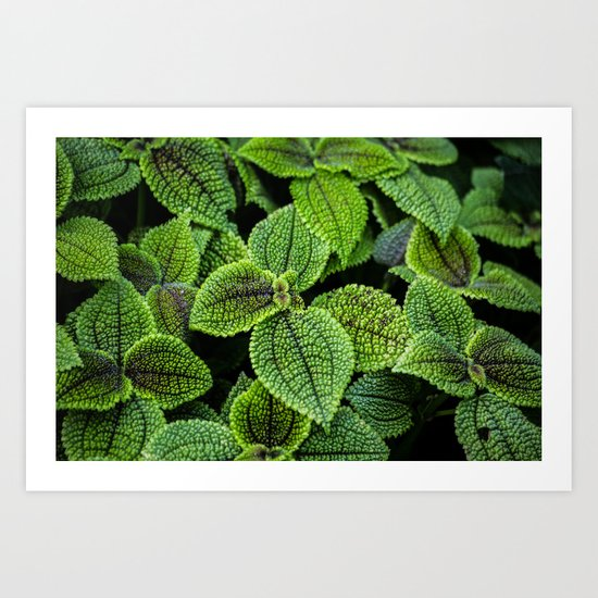 Just Green Art Print