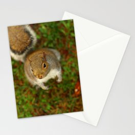 Squirrel In The Forest... Stationery Cards