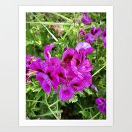 Purple flowers by the sea. Art Print