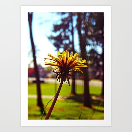 Spring dandelion Art Print
