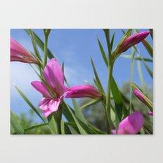 Pink Flowers - Field Gladiolus Canvas Print