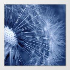 blue dandelion II Canvas Print