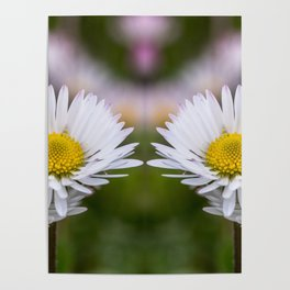 Colourful mirroring daisy flowers Poster