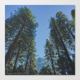 Forest Peak Canvas Print