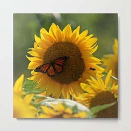 The butterfly the bee and the sunflower Metal Print