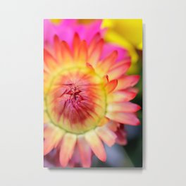 Orange and Yellow Tight Bud macro flower Metal Print