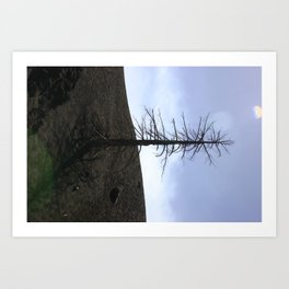 Mount Etna Tree Art Print